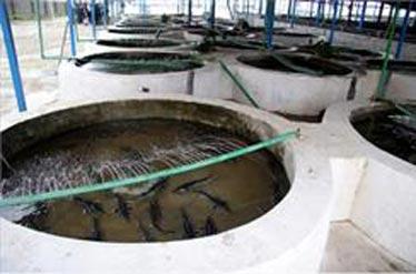 بزرگترین تولید های ماهی اوزون برون