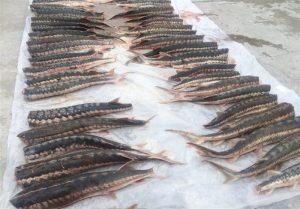 قیمت خرید ماهی اوزون برون