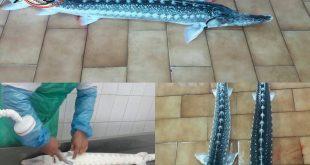خرید ماهی اوزون برون پرورشی