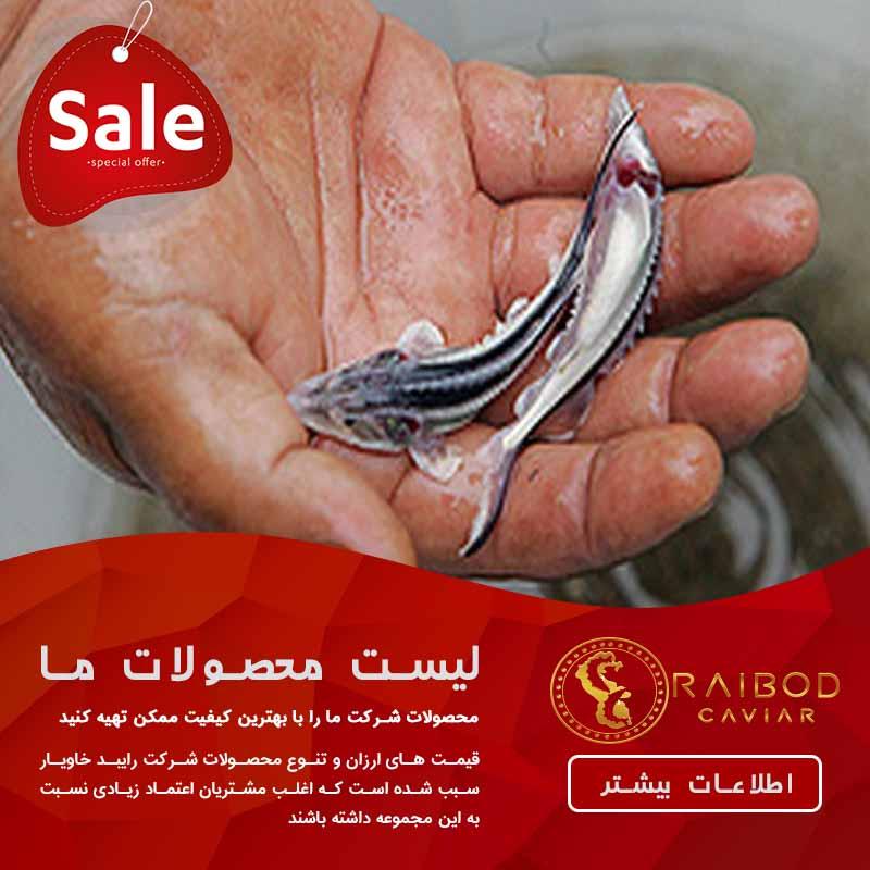 قیمت بچه ماهی 10 گرمی