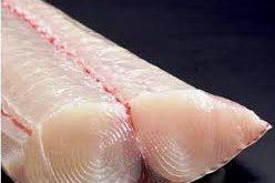 قیمت تولید ماهی اوزون برون منجمد
