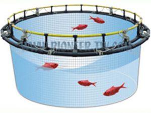 پرورش ماهی اوزون برون در استخر