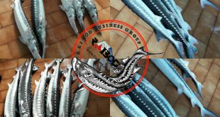 انواع ماهی خاویار در فروشگاه اینترنتی