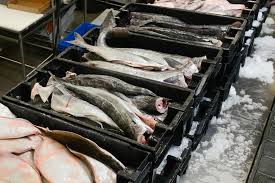 بازار خرید ماهی اوزون برون بسته بندی