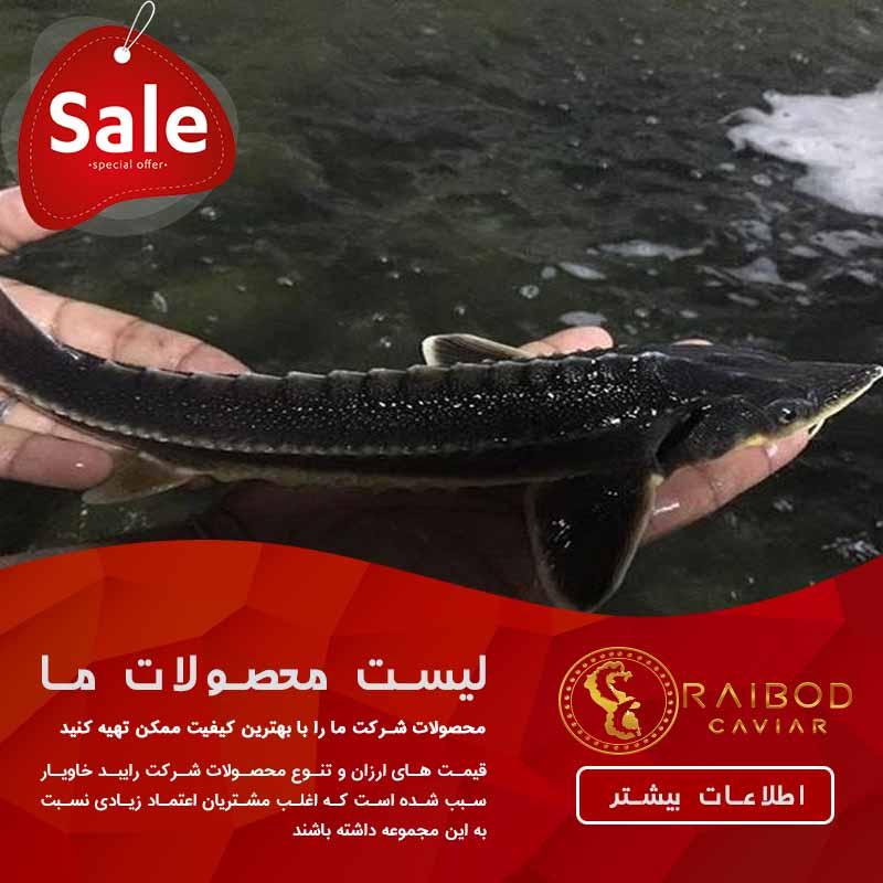 ماهی خاویاری پرورشی در ایران