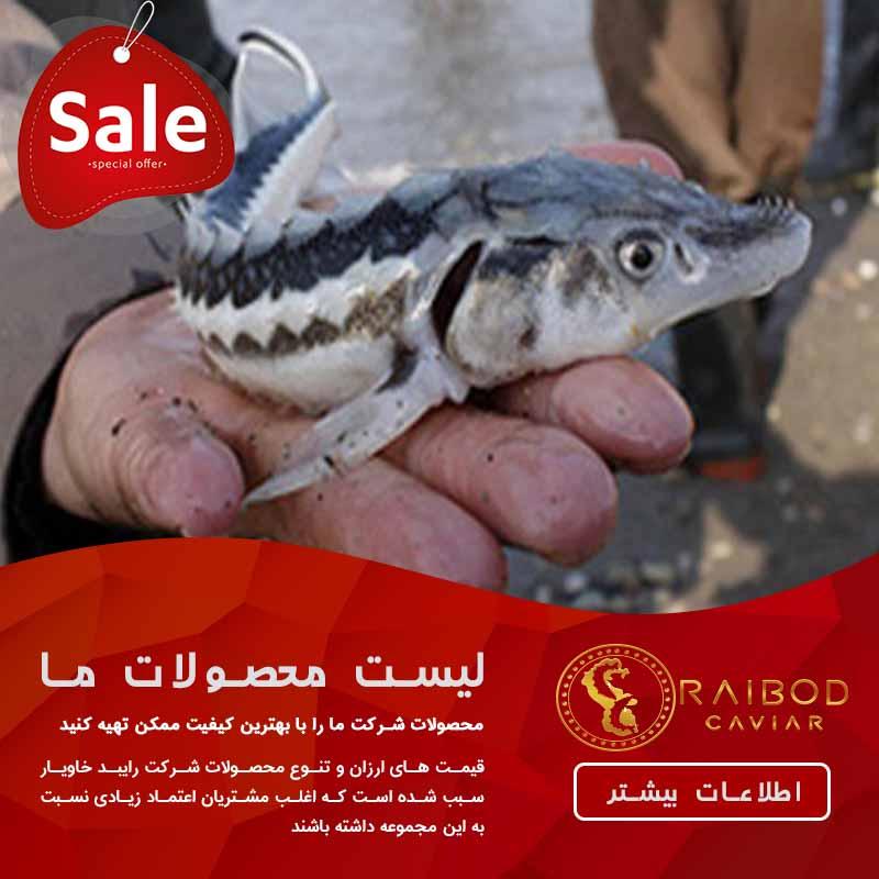 خرید ماهی بری (سیبری)