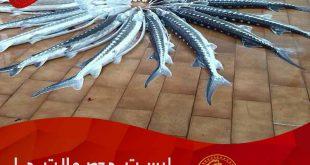 فروش ماهی اوزون برون در سال 98