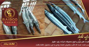 فروش ماهی اوزون برون پرورشی