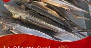 قیمت فروش ماهی اوزون برون زنده