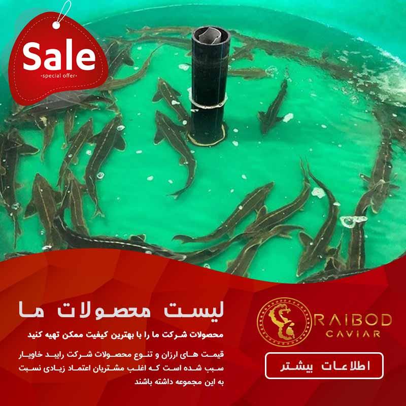 قیمت انواع ماهی خاویار