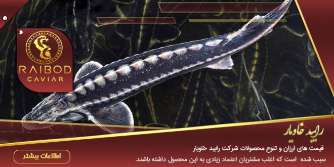 پرورش ماهی خاویار خزر