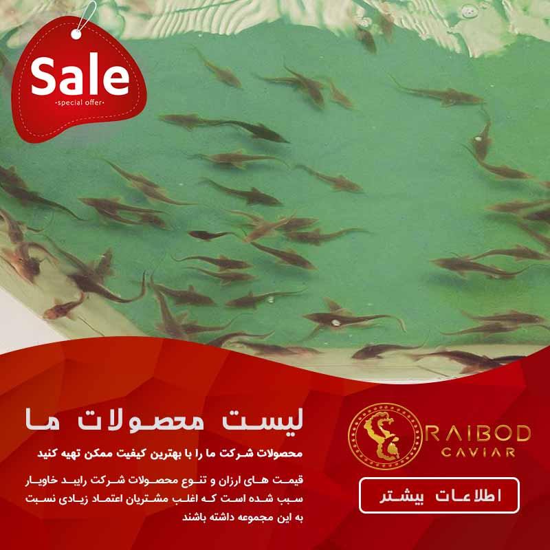 تولید کننده انواع ماهی خاویار
