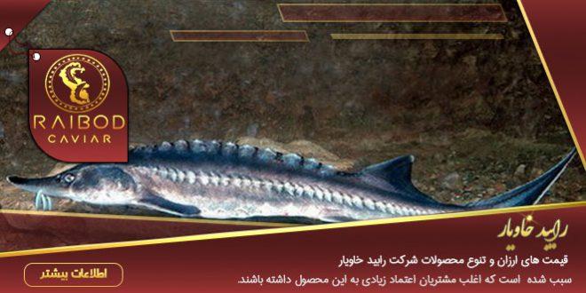 ماهی خاویاری بلوگا