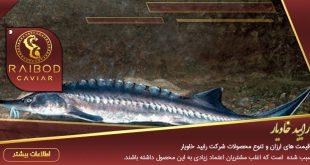 عرضه کننده ماهی خاویار عمده
