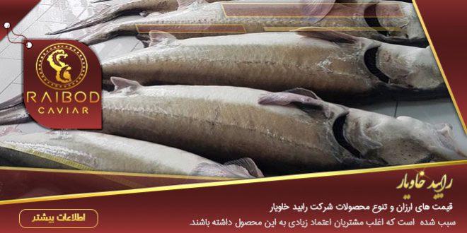 ماهی خاویار بالغ